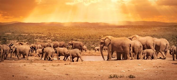 Ecoturismo in africa: elefanti