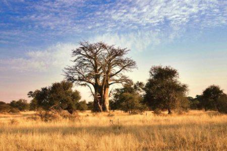 Ecoturismo in Africa, alla scoperta del Great Limpopo Transfrontier Park