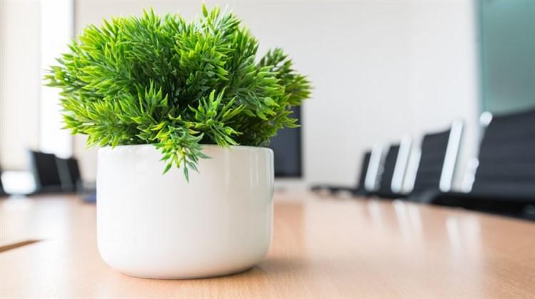 ufficio ecologico: piante in ufficio
