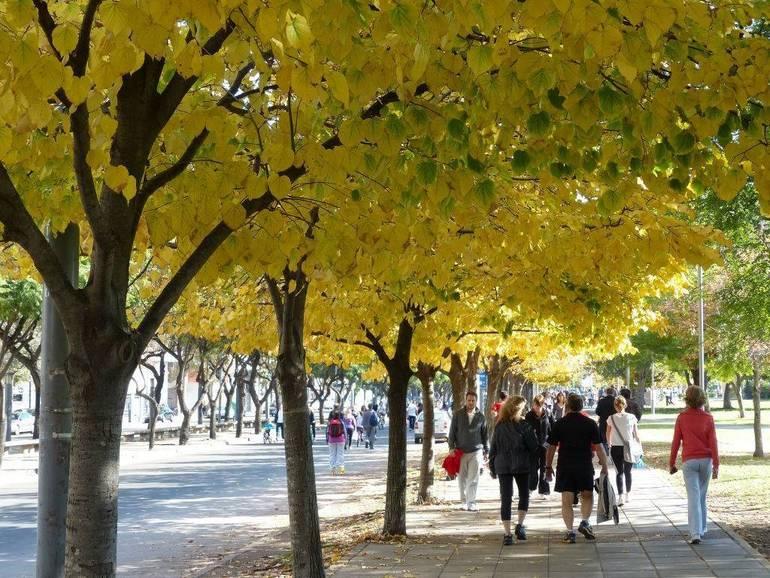 alberi in citta