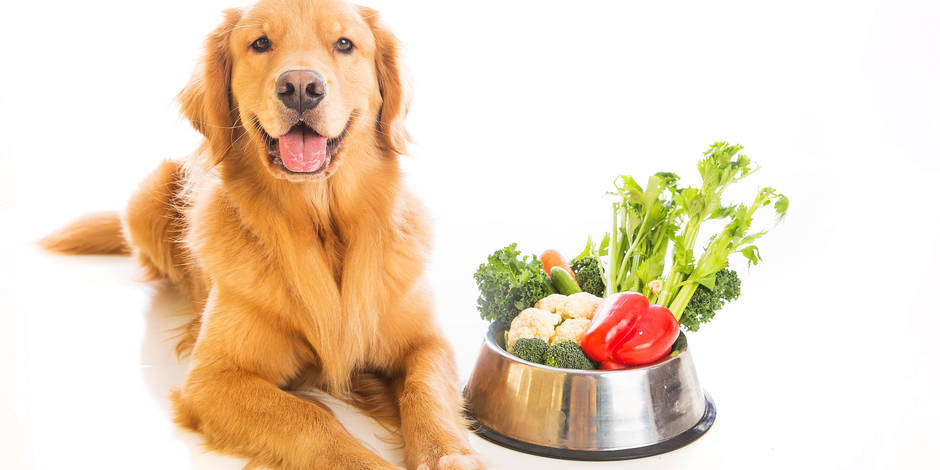 animali da compagnia vegetariani vegani