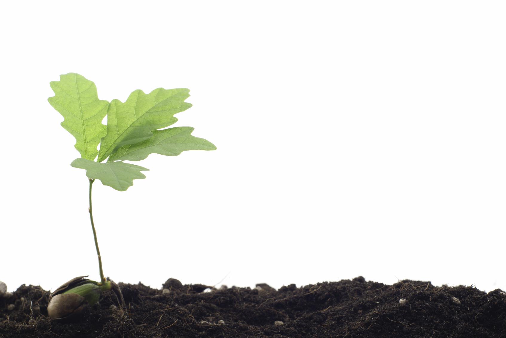 Cos'è il Biochar e perchè negli ultimi anni ci si sta puntando molto?