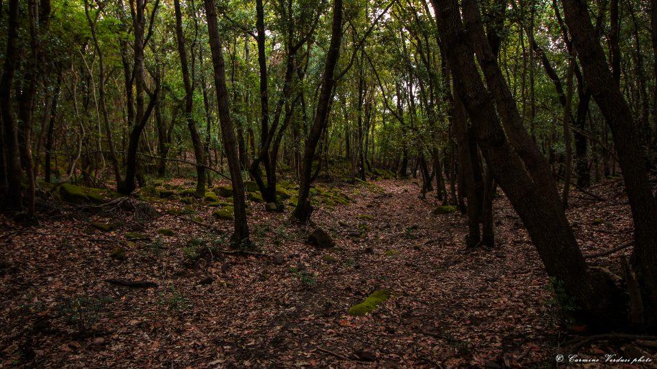 Perchè è importante preservare i boschetti?