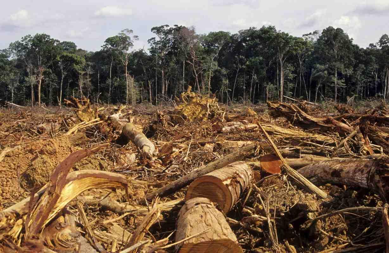 La deforestazione in Amazzonia