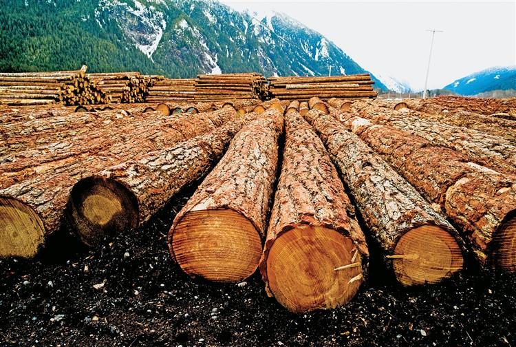 contrastare la distruzione delle foreste dai fazzoletti