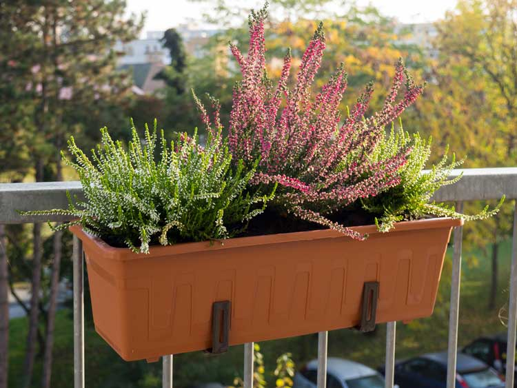 Cosa si può piantare in giardino e sul balcone in autunno?