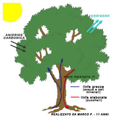 fotosintesi clorofilliana