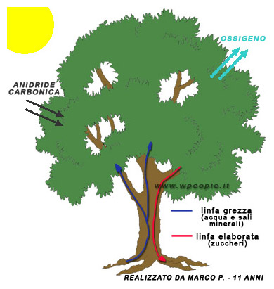 Energia delle Biomasse e fotosintesi clorofilliana