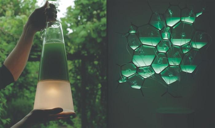 lampada alle alghe