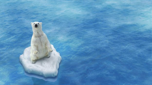Perchè l'orso polare è a rischio estinzione?