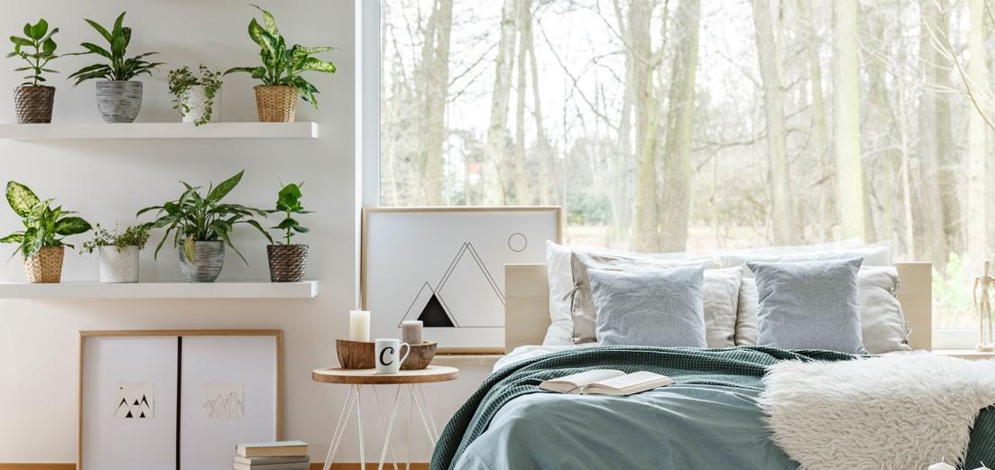Quali sono le migliori piante da tenere in camera da letto?