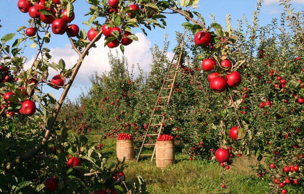 Potatura alberi da frutto: ecco le tecniche e il calendario di quando farla