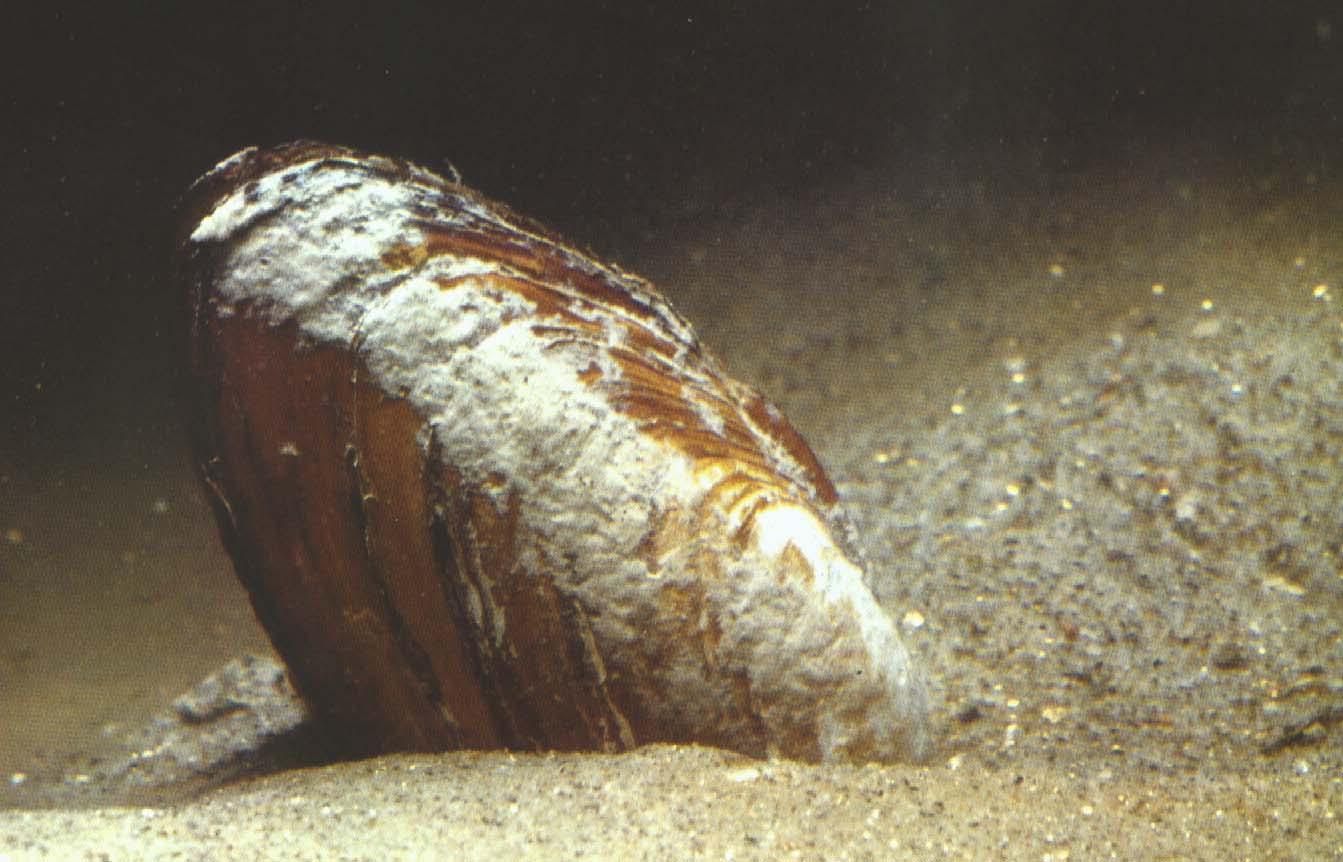 Qualità acque molluschi