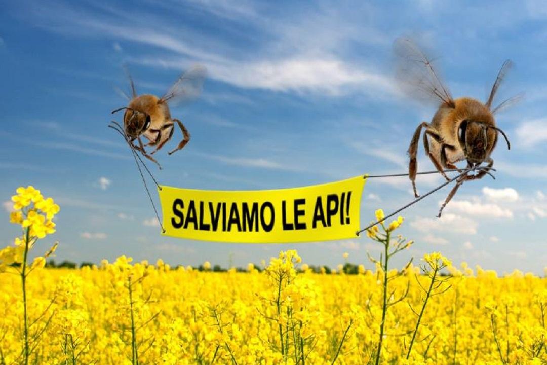 Rischio estinzione per le api. A cosa stiamo andando incontro?