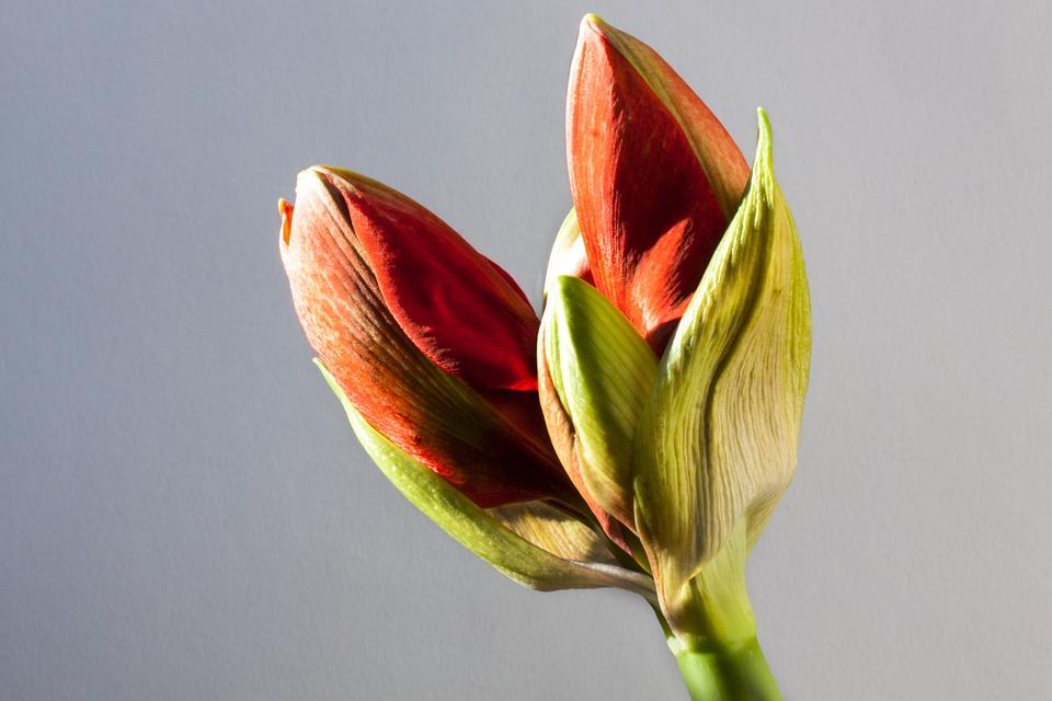 Conosci il Significato dei fiori?