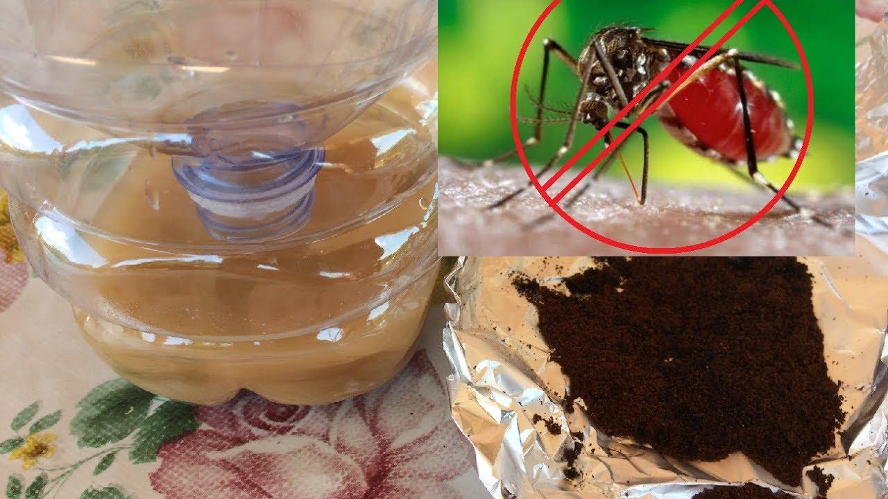 Come allontanare le zanzare in 5 modi naturali